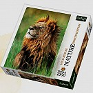Puzzle 1000 Lew Kenia Nature Limited Edition Wild Royals